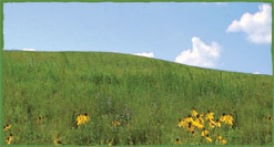 Prairie grassland biome photo