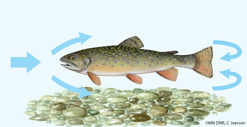 Brook Trout Torpedo Shaped