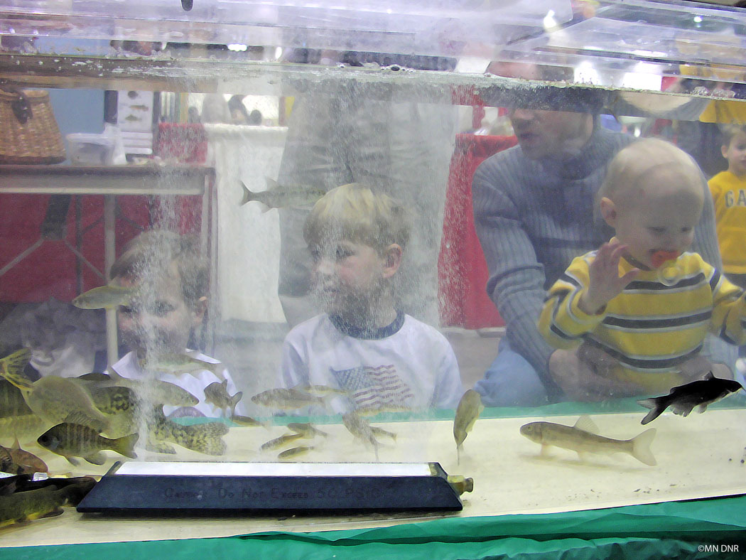 Youth observing fish in an aquarium