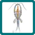 Aquatic Microscopic Organisms