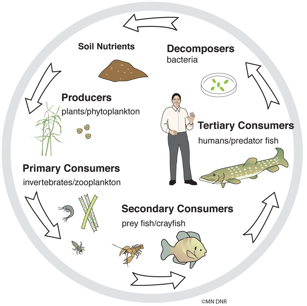 Nutrient Cycle