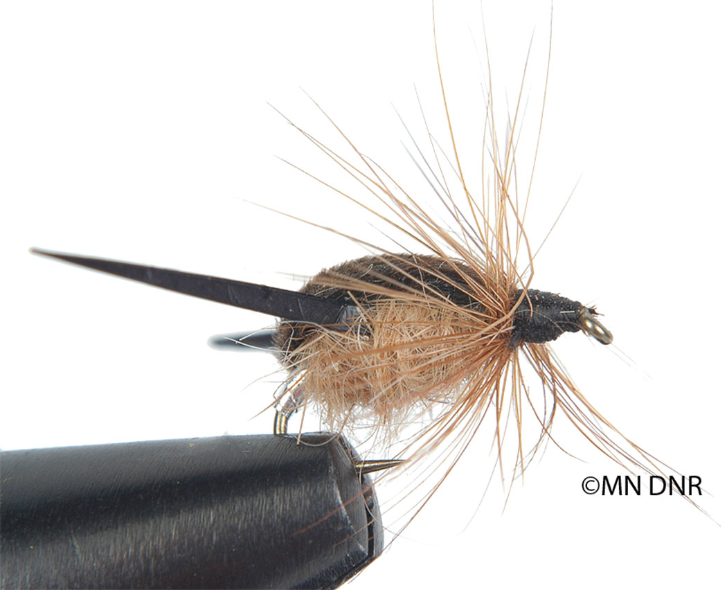 Water Boatman Wet Fly
