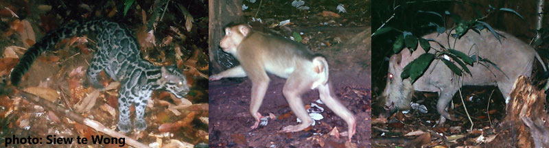animals in Danum Valley Borneo
