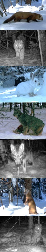 NE MN wildlife collage