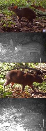 mammals in Panama