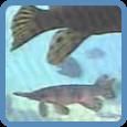 watch fish cam