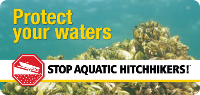 Protect your water from Aquatic Invasive Species