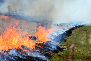 Prescribed burn on grassland habitat.