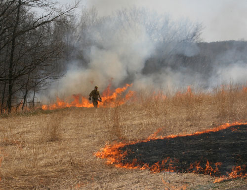 A prescribed burn at Carlos Avery Wildlife Mangement Area.