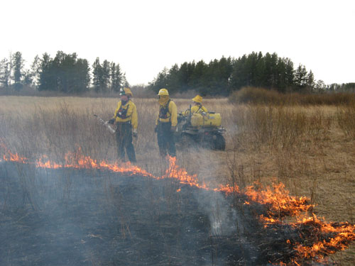 Wildlife staff conduct a prescribed burn on a WMA to enhance habitat for grassland nesting birds.