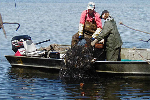 A Hutchinson area fisheries crew checks a trap net.