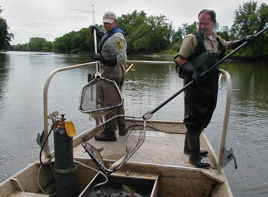 An Ortonville fisheries crew at work along a western Minnesota river.