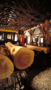 photo: Inside a lumber mill