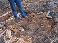 photo of forest floor after chopper