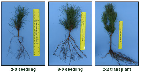 photo: Seedling examples showing differences