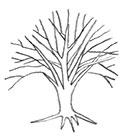 drawing of dead Elm tree