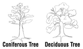 image of different tree types