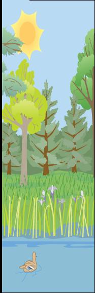 summer forest scene with ducks