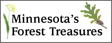 Banner for Minnesota's Forest Treasures