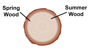 graphic of a cross section