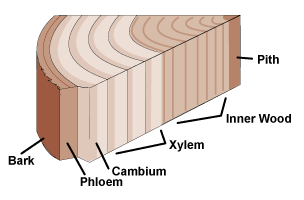 image of a cut away of a tree