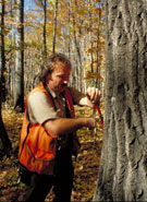photograph of forester taking core sample