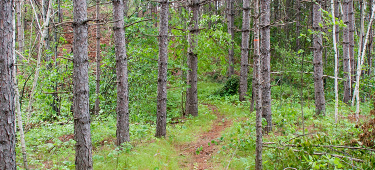 forested trail