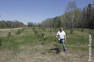photo of Bill Skeesick by pine seedlings