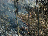 photo:small prescribed burn