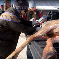 cwd sampling of deer