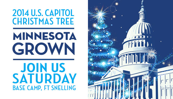 Come to Itasca State Park and see the Capitol tree