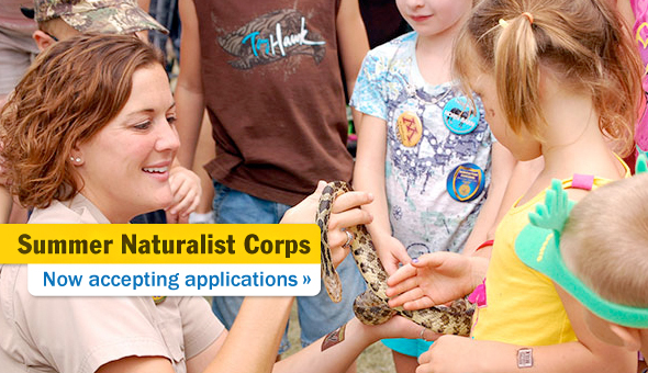Now accepting applications for Summer Naturalist Corps
