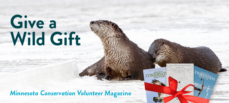 Give a wild gift. MCV Magazine