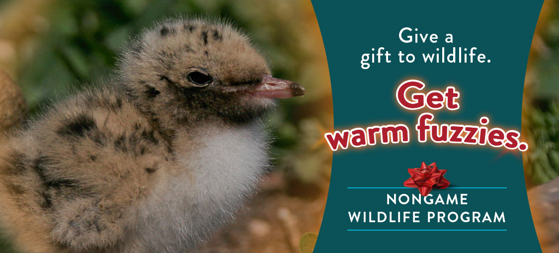 Give a gift to Wildlife. Donate to Nongame wil