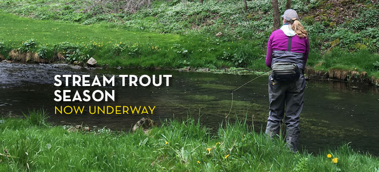 Trout Fishing Spring