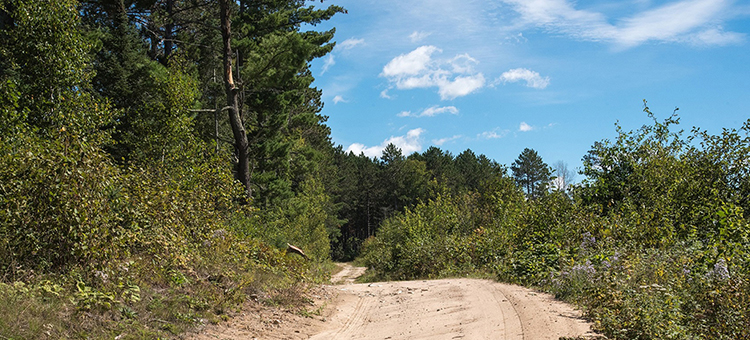 Photo of a dirt trail winding along a forested, hilly terrain in Centennial State Forest.