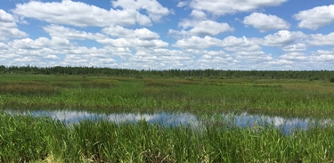 Wetland in northern minnesota