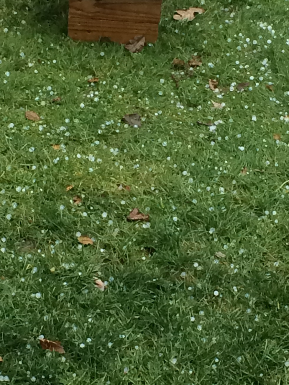 Hail on the ground in Fridley, MN on November 28, 2016
