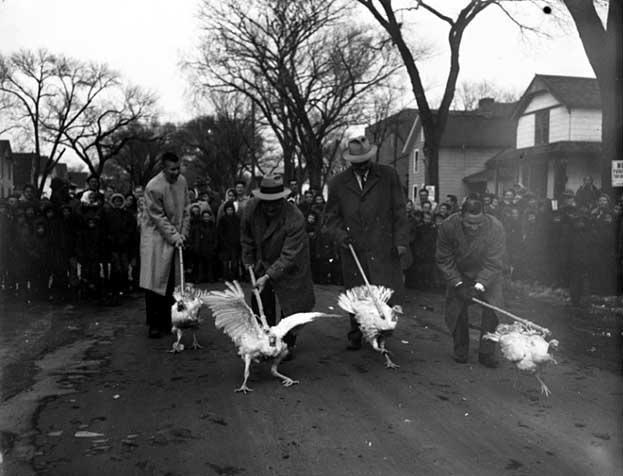 Turkey Race - 1955