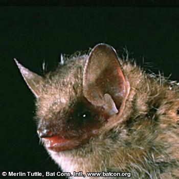 tr-colored bat