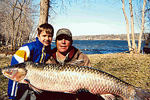 Grass carp caught in the St. Croix River.