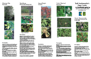 image of Trail Ambassodor Guide to identification of terrestrial invasive plants
