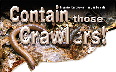 Contain those Crawlers! Invasive Earthworms in Our Forests