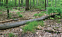 Photo of bare forest floor after earthworms invade.