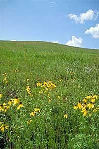Prairie in southwestern Minnesota.