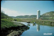 wq_cows