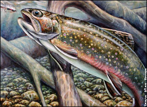 2005_trout_stamp.jpg