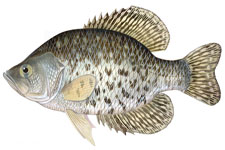 Fish ID Quiz