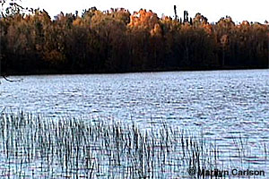 Image of Moose Lake State Park