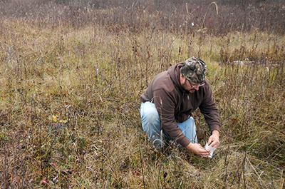 Photo of DNR staff bud capping jack pine seedlings.